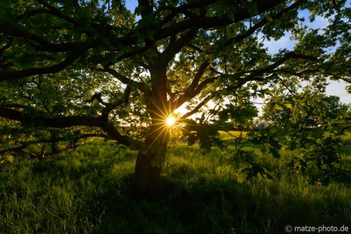 Altmark-Baum-Sonne