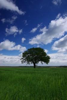 Baum Altmark