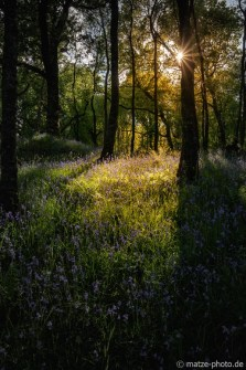 Schottland-Wald-Elfen