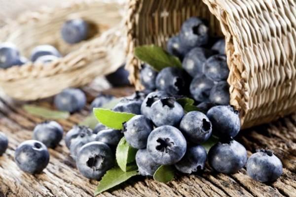 mirtilo-Melhores-Alimentos-Para-a-Definição-Muscular-site-Maucha-Coelho