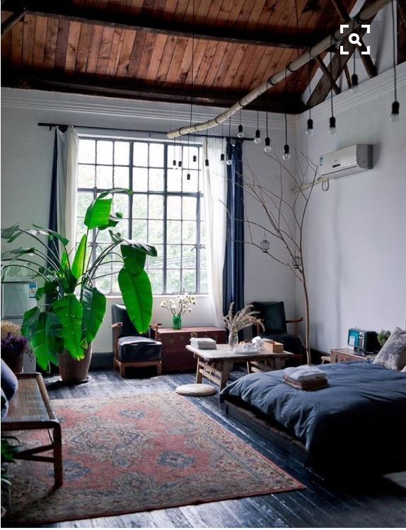 imagem-destacada-tendencia-plantas-dentro-de-casa-dicas-val-fernandes-site-mauchacoelho