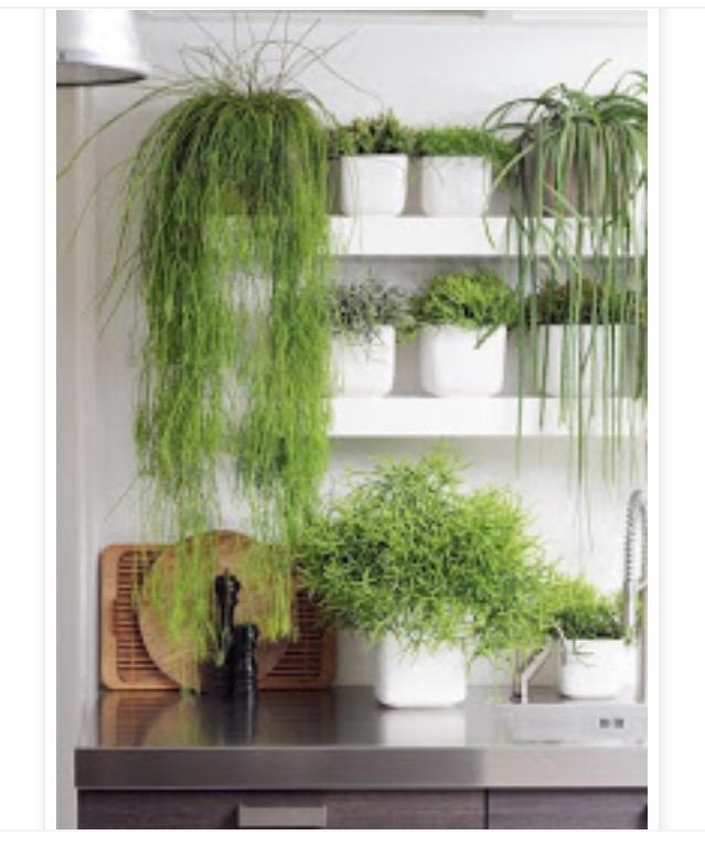 tendencia-plantas-dentro-de-casa-dicas-val-fernandes-site-mauchacoelho-14