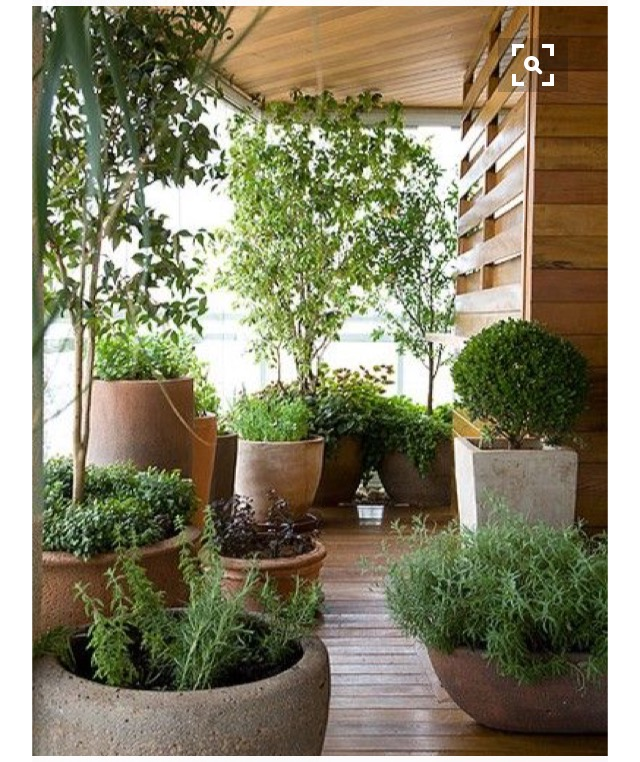 tendencia-plantas-dentro-de-casa-dicas-val-fernandes-site-mauchacoelho-17