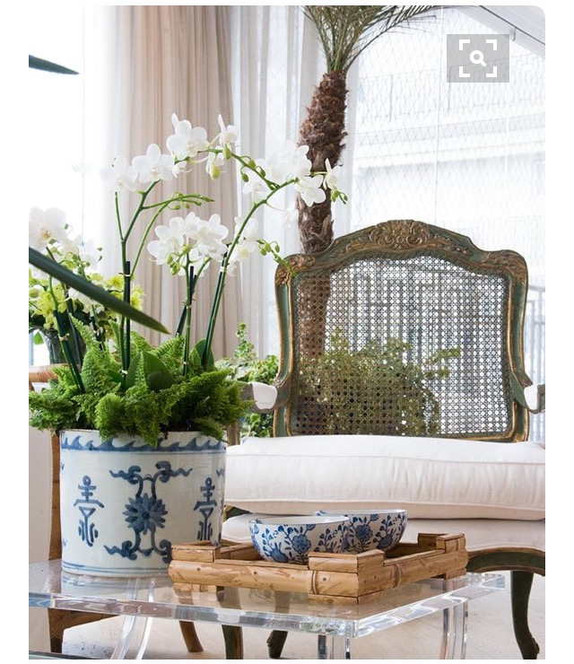 tendencia-plantas-dentro-de-casa-dicas-val-fernandes-site-mauchacoelho-9