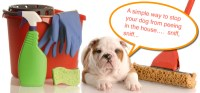 What To Do If Dog Pees On Carpet - Cfcpoland