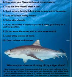how to avoid a shark attack [ 1470 x 2208 Pixel ]