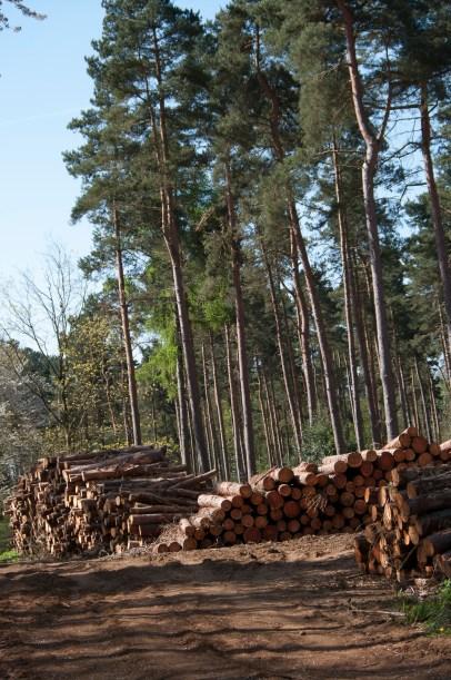 Maulden Woods