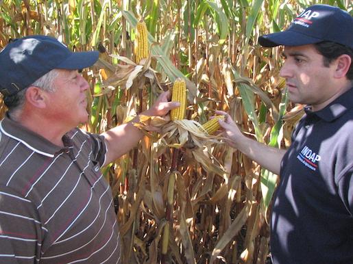 CORE Maule apoyará con 910 millones a productores de maíz y viñateros