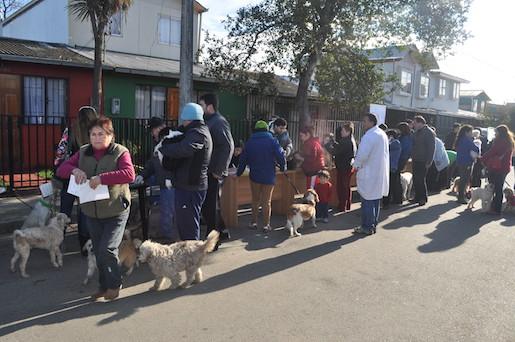 """Vecinos de población """"San Luis""""  vacunaron a sus mascotas contra La Rabia"""