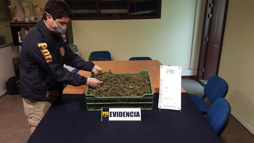 PDI Curicó incautó más de un kilo de cannabis tras control en terminal de buses