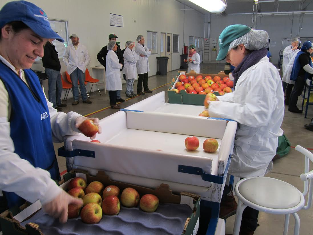 SAG inicia segundo periodo de postulación para la autorización de exportadoras de productos hortofrutícolas chilenos que deseen exportar a la Federación Rusa