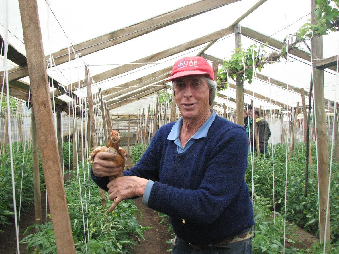 Agricultor maulino innova usando aves para controlar bichos y malezas