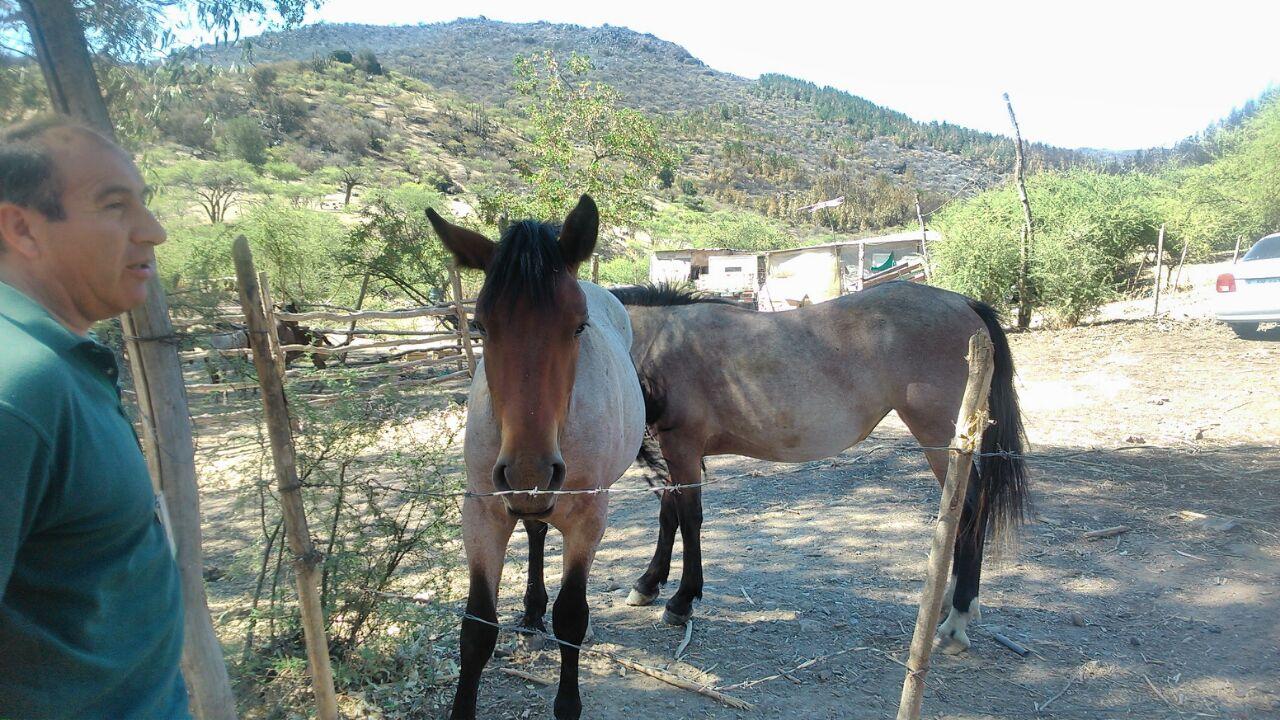 SAG en terreno entrega recomendaciones a crianceros y agricultores para la recuperación de animales y colmenas