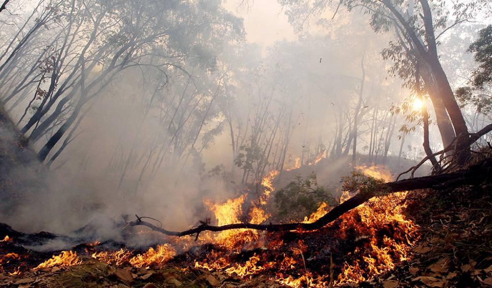 Amplían zona de catástrofe en el Maule y realizan evacuación masiva por violentos incendios