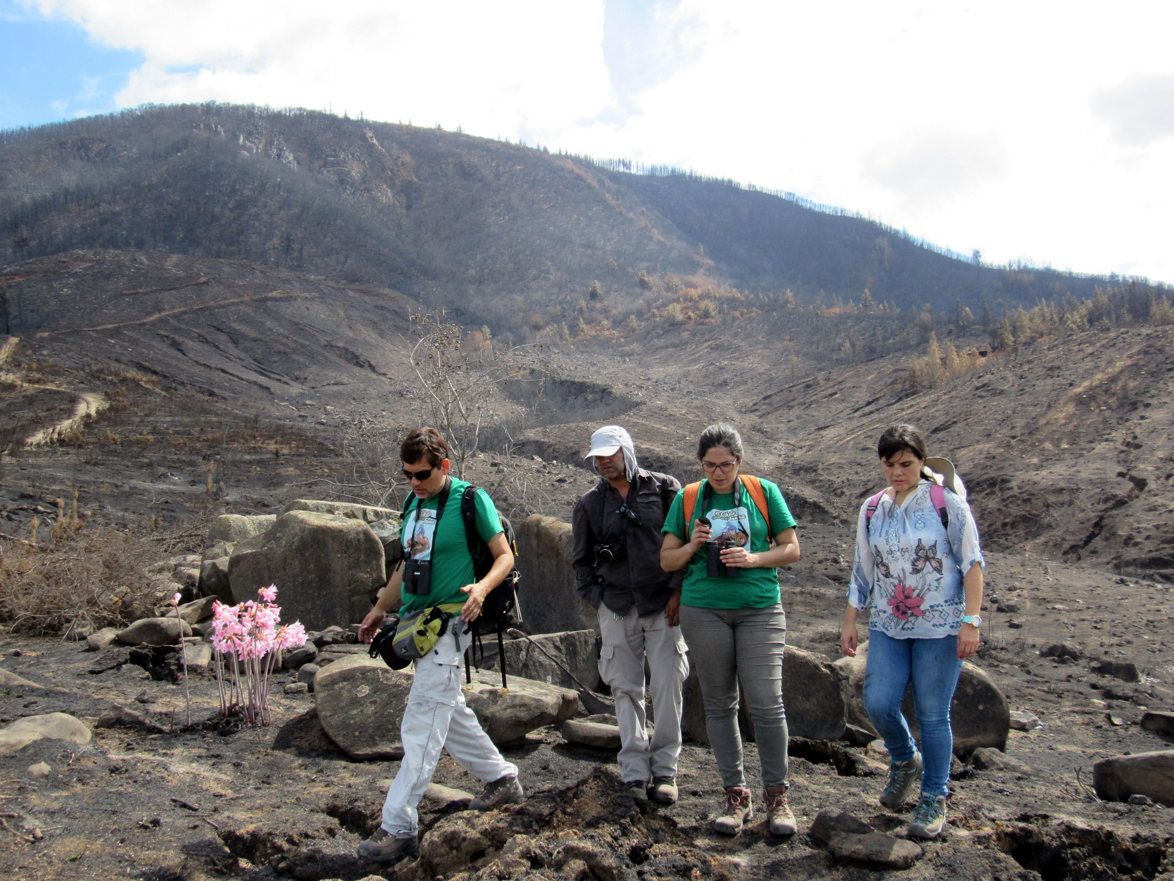Seremi del Medio Ambiente evalúa degradación al patrimonio natural en Cerro Name por incendio forestal en Cauquenes