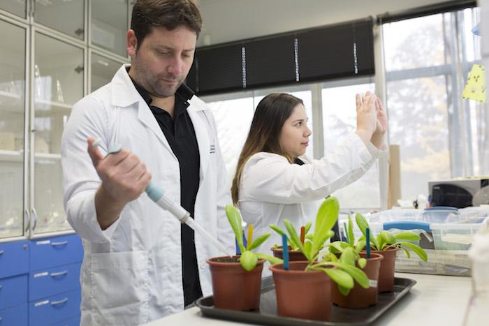 Científicos crean súper vegetales con bacterias de la Antártica