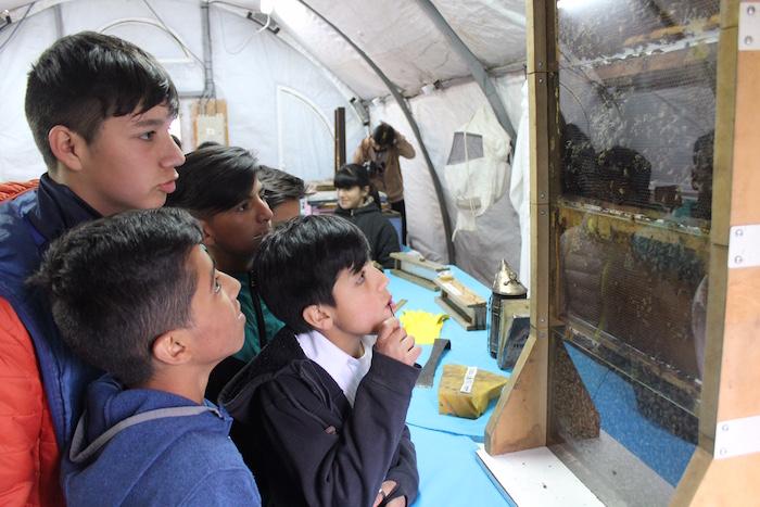 Municipalidad de Linares implementa la apicultura como acción educativa