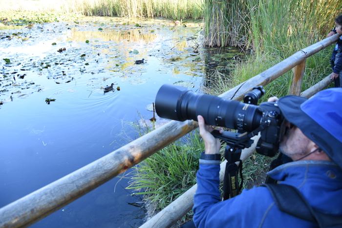 Proyecto busca registrar las diversas especies de aves que habitan en el Maule