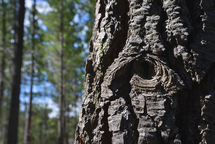 Académicos revelan importancia de los bosques para hacer frente al cambio climático