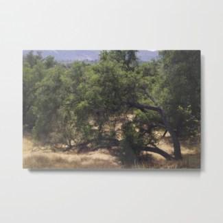 tree-growing-sideways-metal-prints