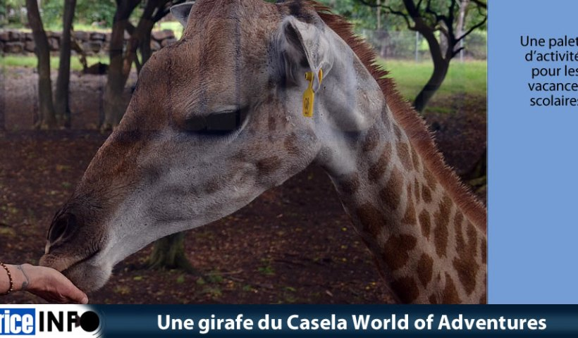 Une girafe du Casela World of Adventures