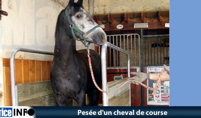 Pesée d'un cheval de course