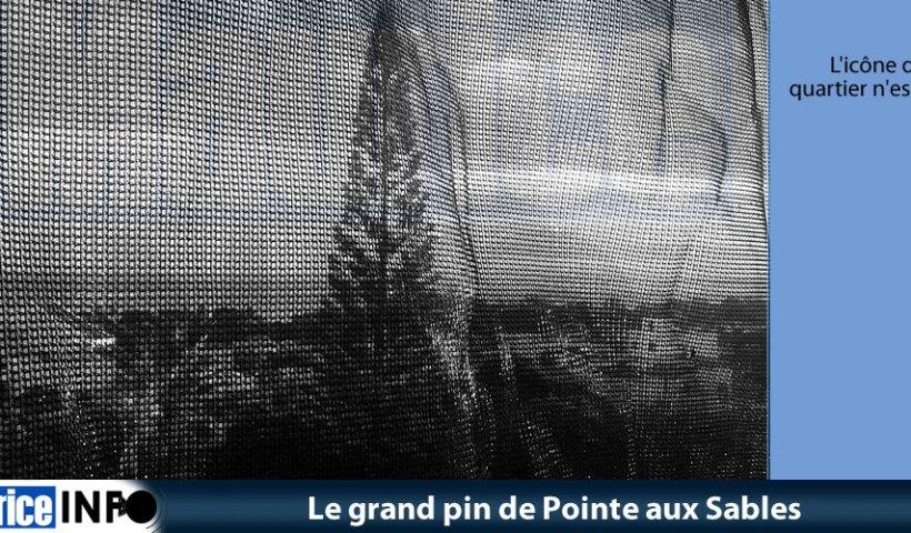 Le grand pin de Pointe aux Sables