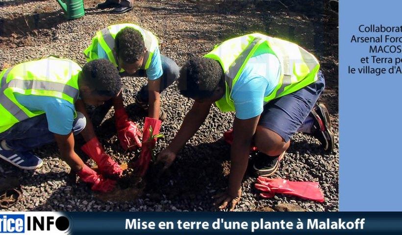 Mise en terre une plante à Malakoff