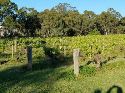 Langmeil Old Vines