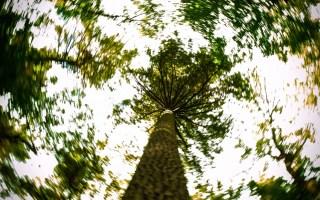 Spiral Forest