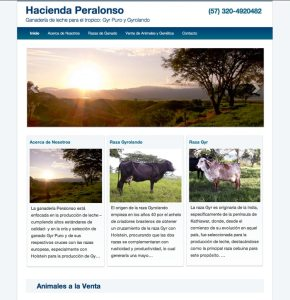 home page picture of peralonso.co