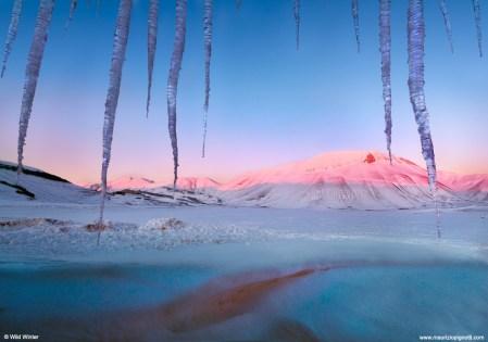 ©-Wild-Winter