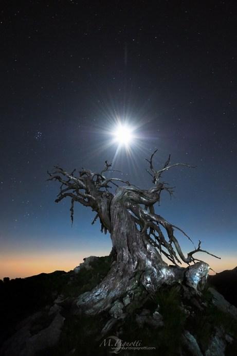 © Dawned Lunar