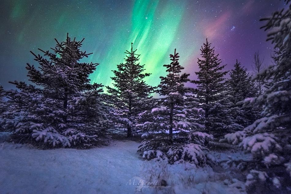 ©-Iceland-Trees