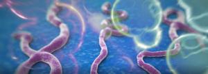 Ebola Experts