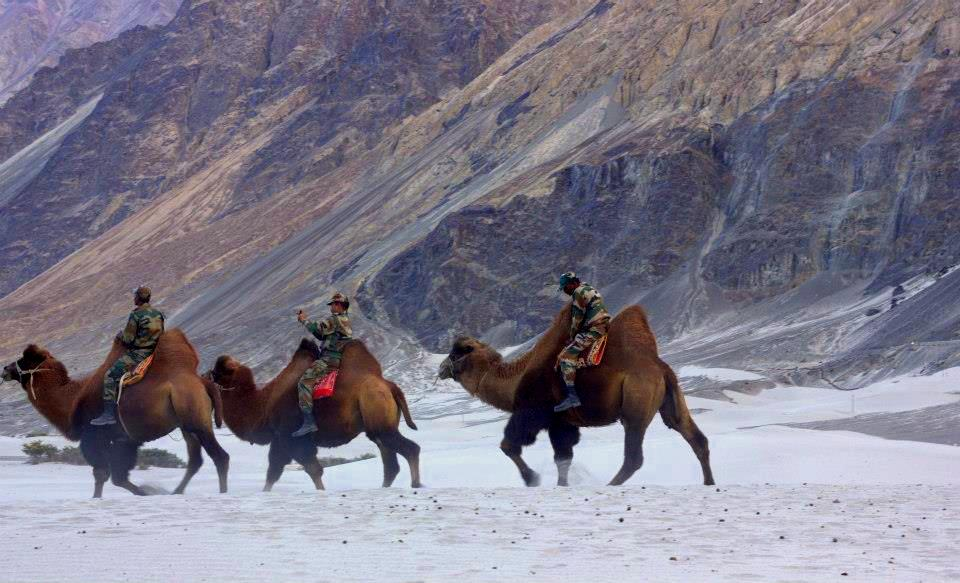 Nubra Valley is famous for white sand dunes