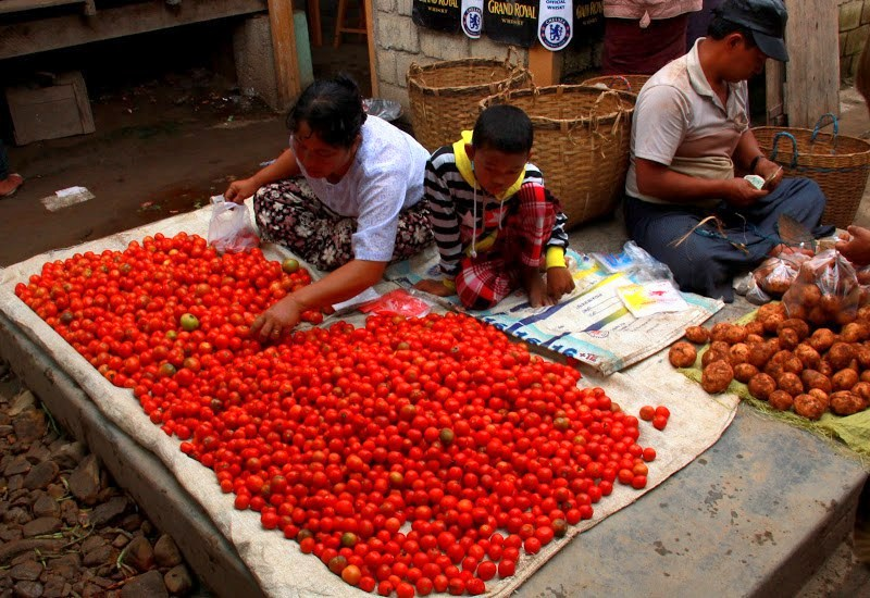 Tomatoes grown locally are sold at lake inle weekly markets