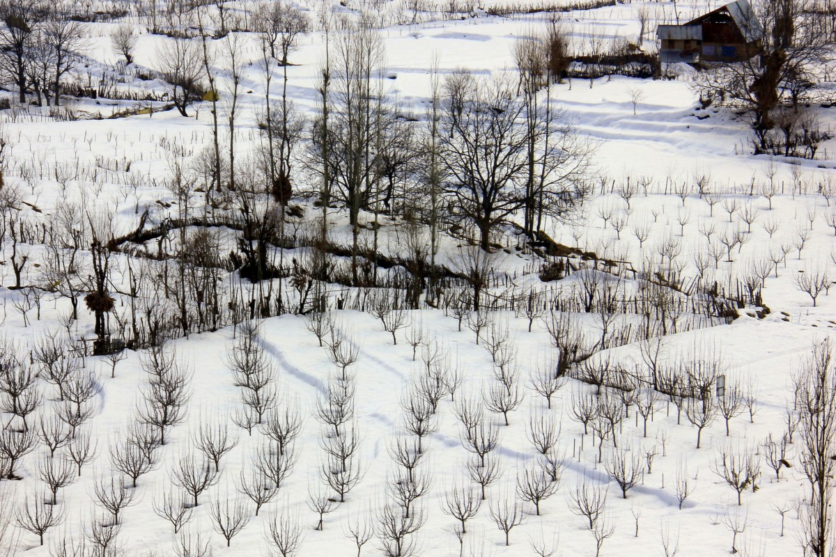 Dazzling white colour of Kashmir in winter