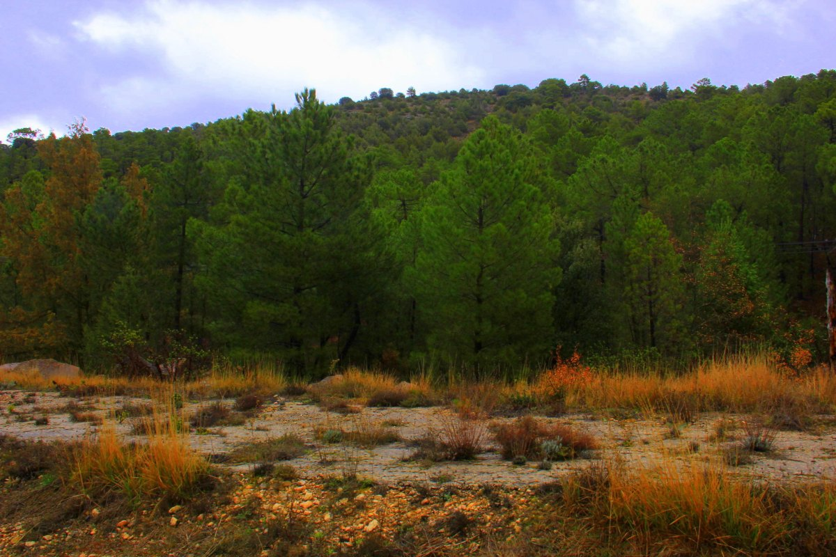 La Mancha is also a land of mountains, gorges, and wetlands