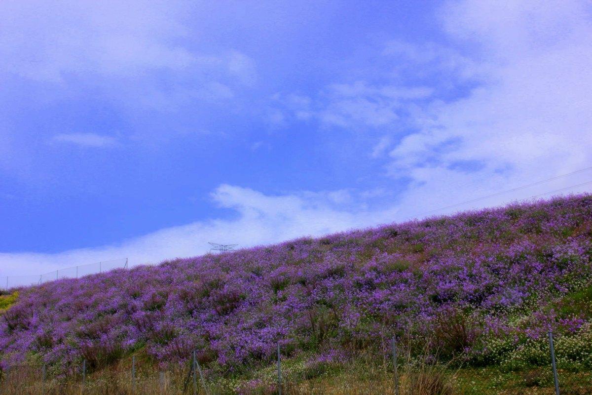 wild flower fields of la mancha