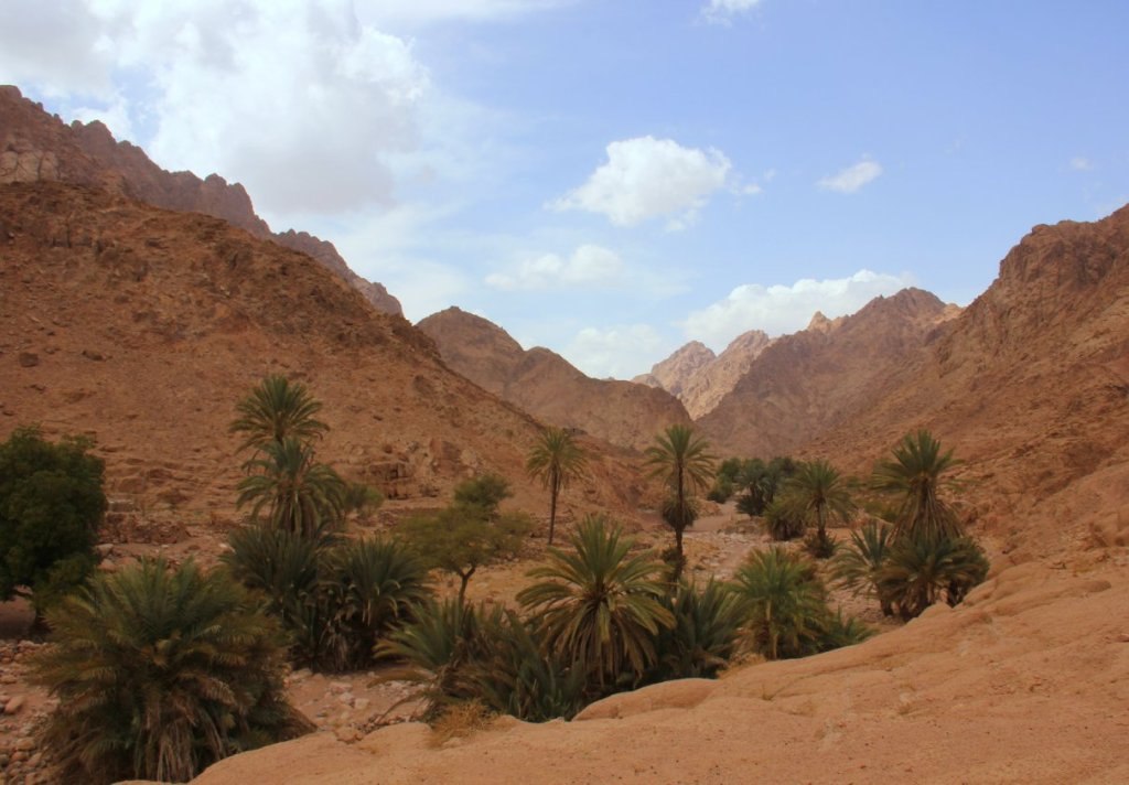 The Bedouin gardens of Sinai