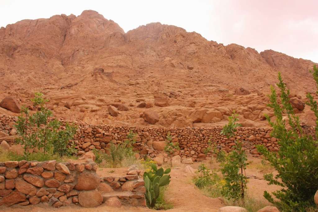 bedouin gardens to hundreds of years