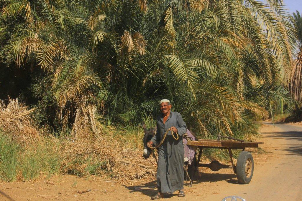 a local of the bahariya oasis