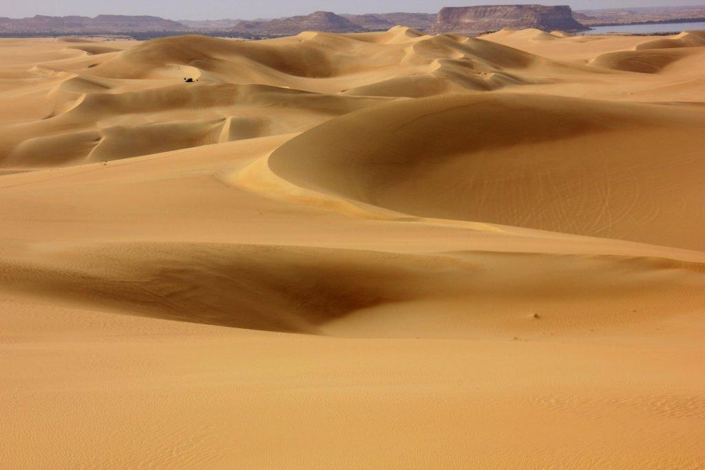 western desert safari near siwa oasis