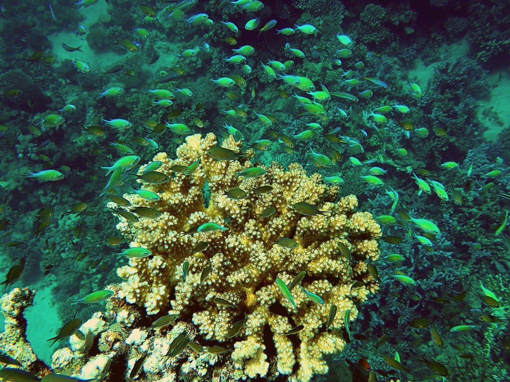 corals seen while scuba diving in the red sea