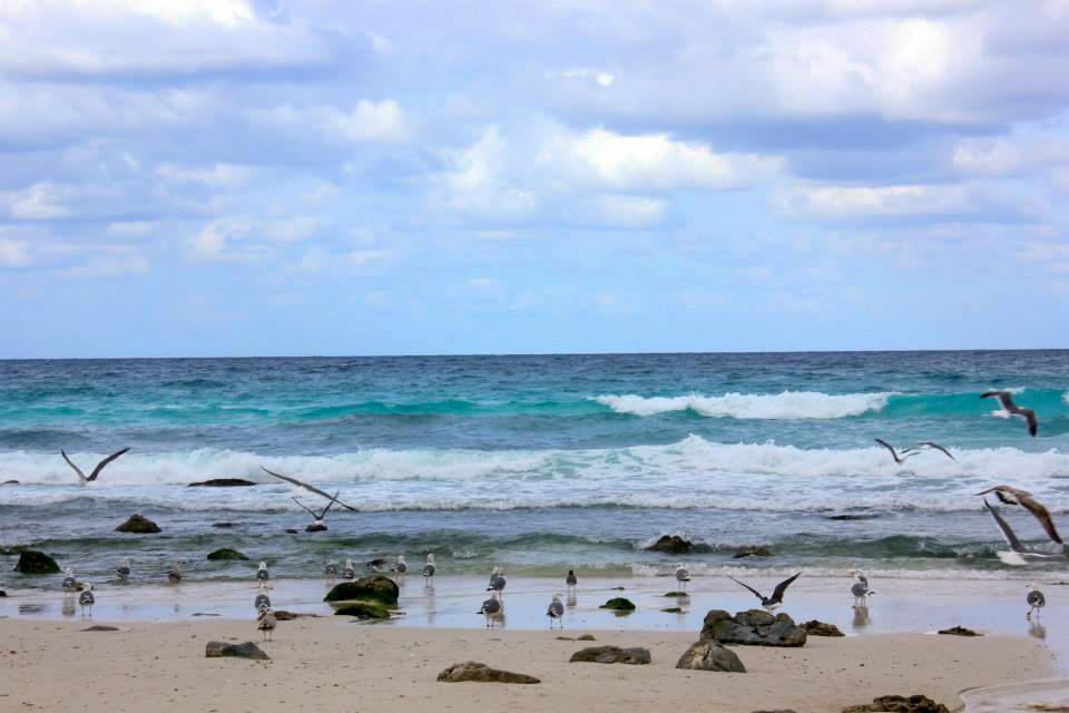 The Arhar Beach of Socotra Yemen