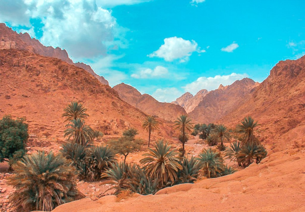 The Bedouin gardens of Sinai