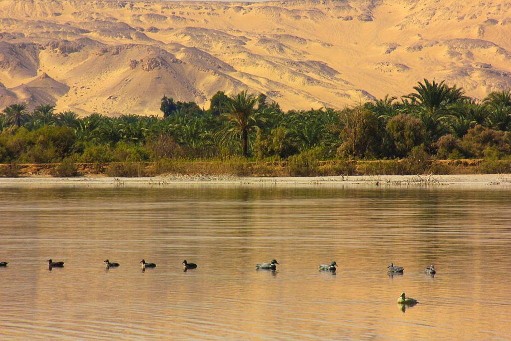 The Lake Marun near Bahariya Oasis