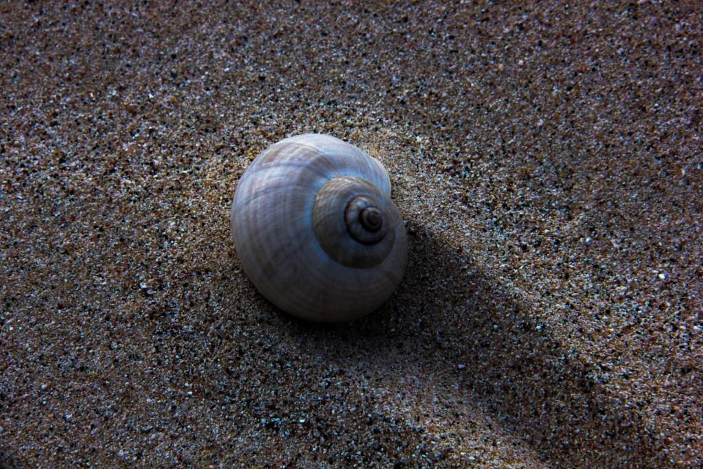 Seashell on Omak beach