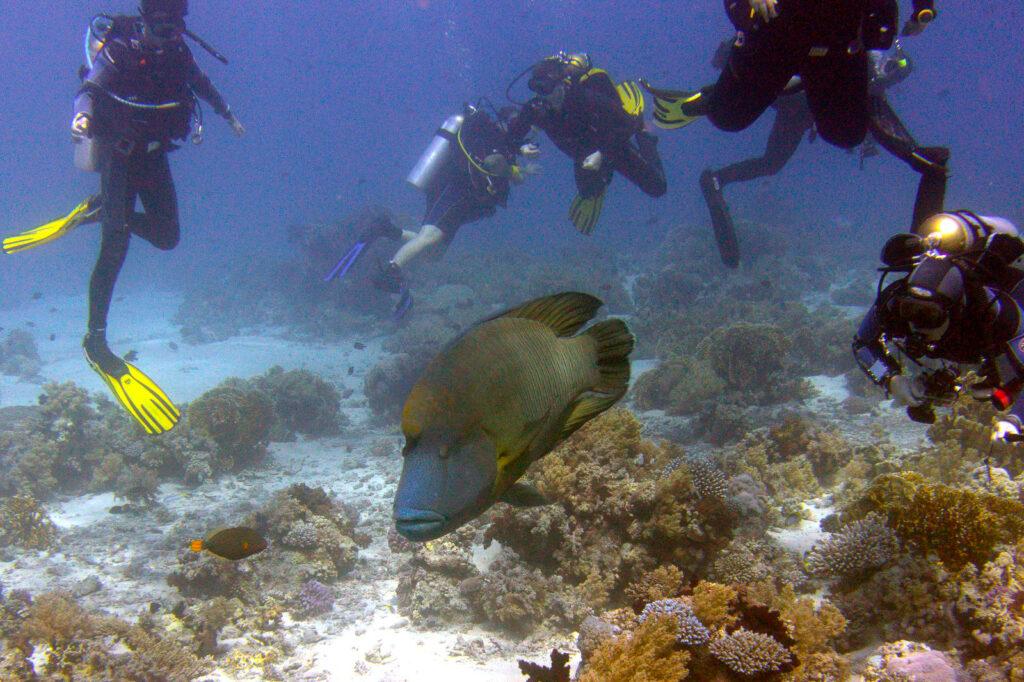 underwater life in Marsa Alam in Egypt